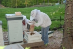 val pours bees