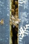 bees working plug