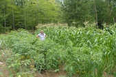 Tomatos and corn are taller than Gayla!