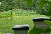 The bees are staying local right now