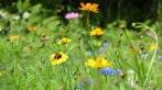 Native NE wildflowers make a great bee pasture