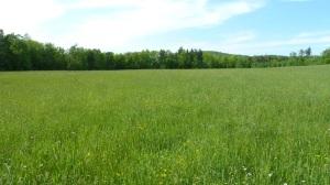 Part of our acreage in Sullivan...