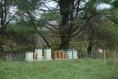 The apiary in Sullivan