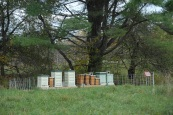 The apiary in Sullivan