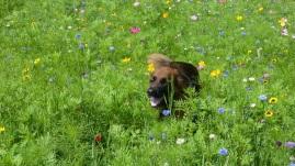 Hera in flowers
