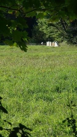 Sullivan hives