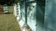 cu-hives.jpg