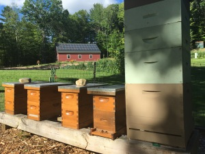 Nucs before feeding